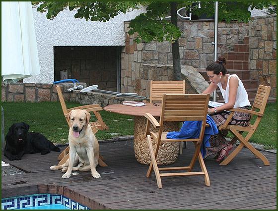 labradores-en-la-terraza